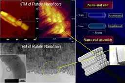 3-D Conceptual Structure of Carbon Nanofibers: Assembly of Rod-shaped Primary Units
